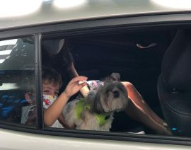 Bênção dos animais em drive-thru acontece em frente ao Coleginho
