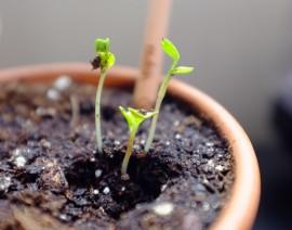 Lápis que vira planta é sucesso no CSA